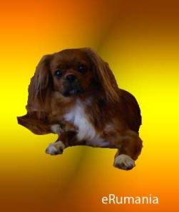 nueva rasa de perros rumanos